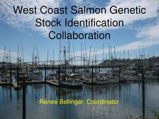 West Coast Salmon Genetic Stock Identification Collaboration