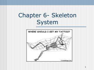 Chapter 6- Skeleton System