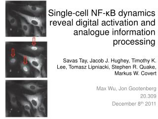 Single-cell NF- κB  dynamics reveal digital activation and analogue information processing
