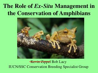 The Role of  Ex-Situ  Management in the Conservation of Amphibians