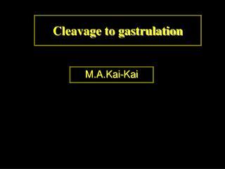 Cleavage to gastrulation