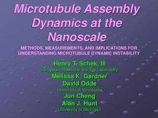 Microtubule Assembly Dynamics at the Nanoscale