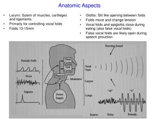 Anatomic Aspects