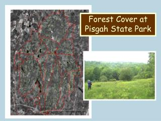 Forest Cover at Pisgah State Park