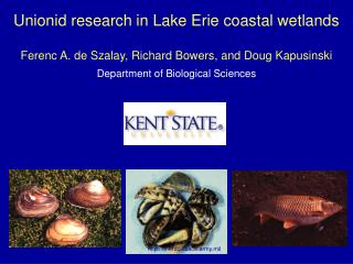 Unionid research in Lake Erie coastal wetlands