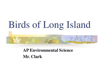 Birds of Long Island