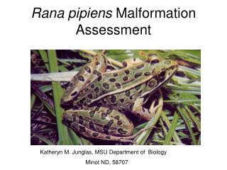 Rana pipiens  Malformation Assessment