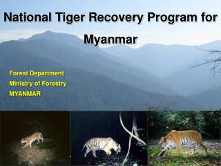 National Tiger Recovery Program for Myanmar