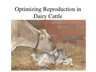 Optimizing Reproduction in Dairy Cattle