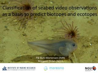 Classification of seabed video observations as a basis to predict biotopes and ecotopes