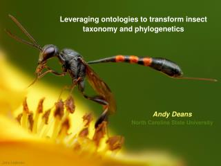 Leveraging ontologies to transform insect taxonomy and phylogenetics
