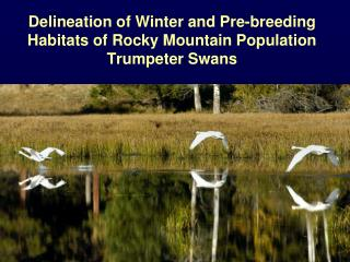 Delineation of Winter and Pre-breeding Habitats of Rocky Mountain Population Trumpeter Swans