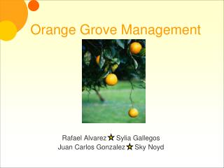 Orange Grove Management