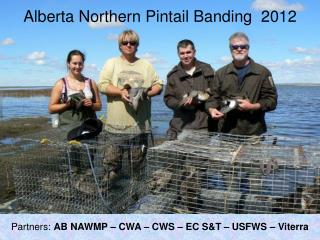 Alberta Northern Pintail Banding  2012