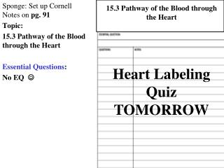 Sponge: Set up Cornell Notes on  pg. 91 Topic:  15.3 Pathway of the Blood through the Heart