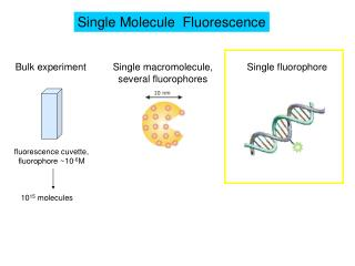 Single Molecule  Fluorescence