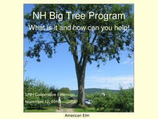 NH Big Tree Program