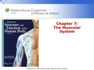 Chapter 7: The Muscular System
