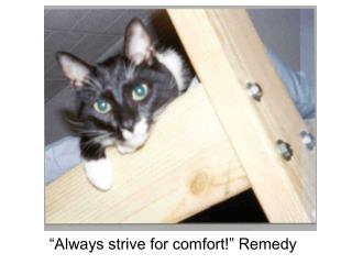 """Always strive for comfort!"" Remedy"