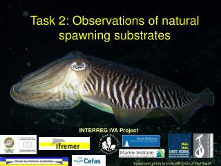 Task 2: Observations of natural spawning substrates