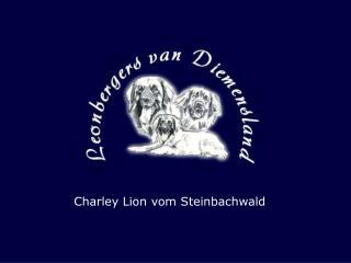Charley Lion vom Steinbachwald