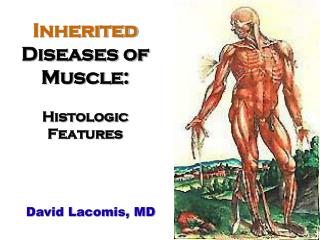 Inherited Diseases of Muscle: Histologic Features