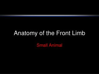 Anatomy of the Front Limb