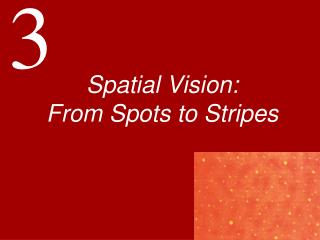 Spatial Vision: From Spots to Stripes