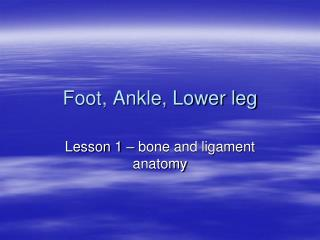 Foot, Ankle, Lower leg