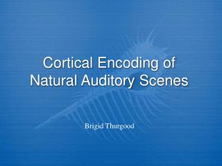 Cortical Encoding of Natural Auditory Scenes