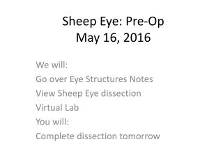 Sheep Eye: Pre-Op May 16, 2016