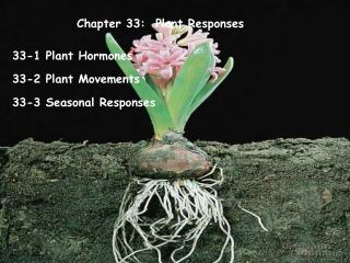 Chapter 33:  Plant Responses