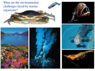What are the environmental challenges faced by marine organisms?