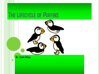 The Lifecycle of Puffins