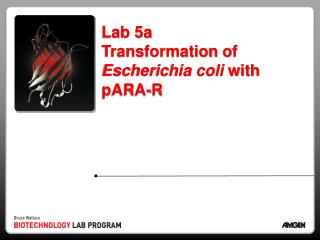Lab 5a  Transformation  of  Escherichia coli  with  pARA -R