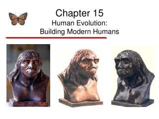 Chapter 15 Human Evolution: Building Modern Humans