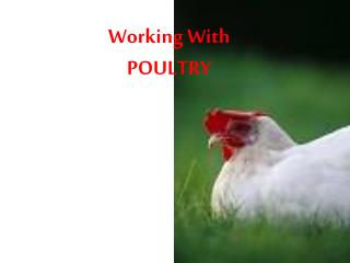 Working With  POULTRY