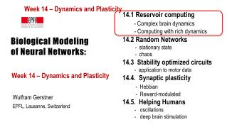 Biological Modeling  of Neural Networks: