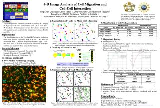 4-D Image Analysis of Cell Migration and  Cell-Cell Interaction