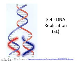 3.4 - DNA Replication (SL)