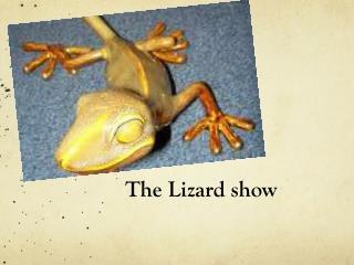 The Lizard show