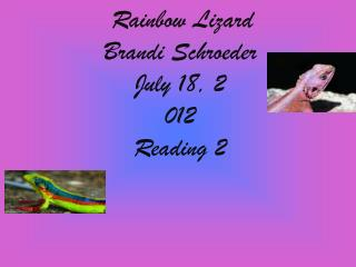Rainbow Lizard Brandi Schroeder July 18,  2 012 Reading 2
