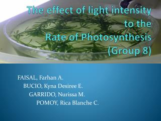 The effect of light intensity to the  Rate of Photosynthesis (Group 8)