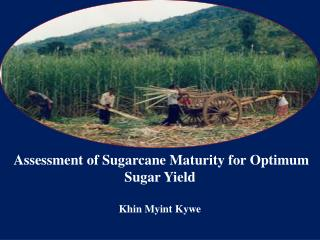 Assessment of Sugarcane Maturity for Optimum Sugar Yield Khin Myint Kywe