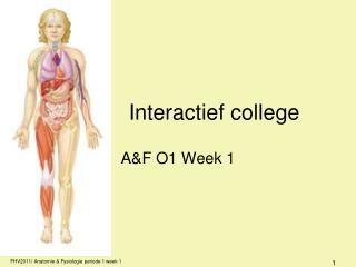 Interactief college