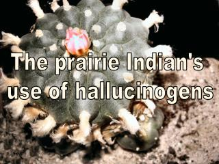 The prairie Indian's  use of hallucinogens