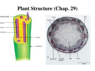 Plant Structure (Chap. 29)