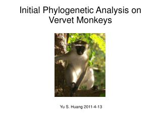 Initial Phylogenetic Analysis on Vervet Monkeys