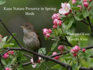 Kuse Nature Preserve in Spring Birds