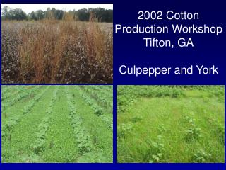 2002 Cotton Production Workshop Tifton, GA Culpepper and York